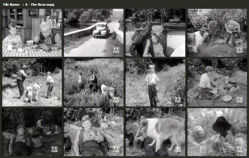 Name:  6 - The Bear.jpg Views: 353 Size:  329.4 KB