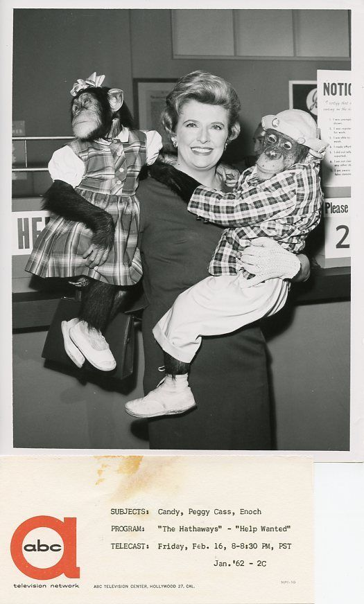 PEGGY_CASS_CANDY_ENOCH_CHIMPANZEES_SMILING_THE_HATHAWAYS_ORIG_1962_ABC_TV_PHOTO