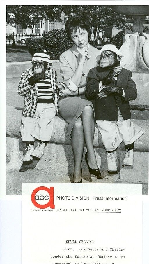 TONI_GERRY_ENOCH_TONI_GERRY_CHIMPANZEES_THE_HATHAWAYS_ORIGINAL_1961_ABC_TV_PHOTOenochcharley