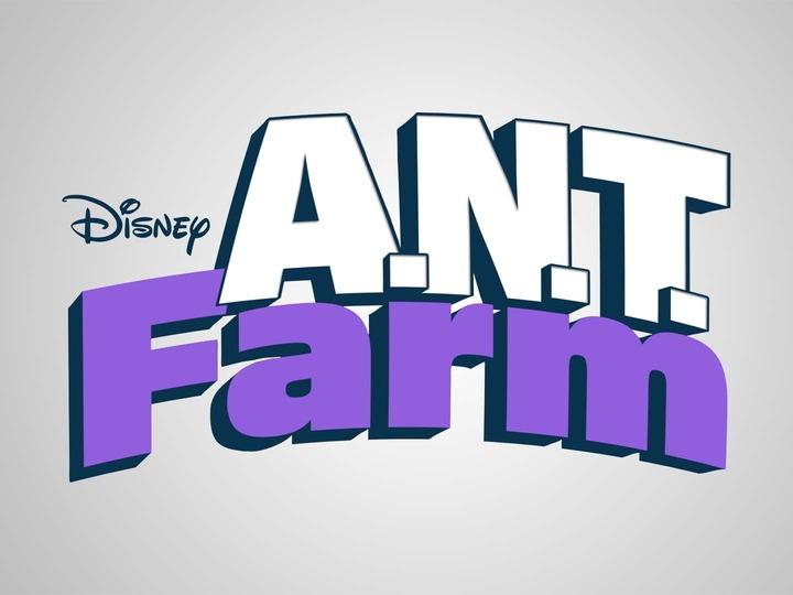 ant-farm-21